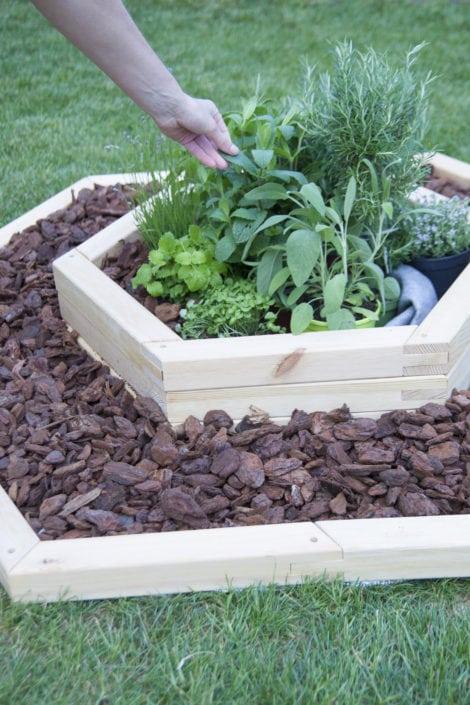 bylinky na zahrádce, bylinky, pěstování bylinek, bylinkářství, zahradní kůra