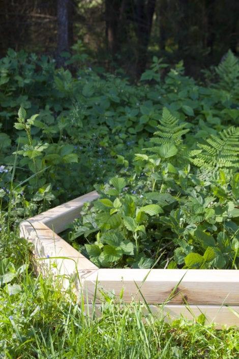 příroda, design v přírodě, zahradní design, stylová zahrada, zahradničení, designové zahradničení